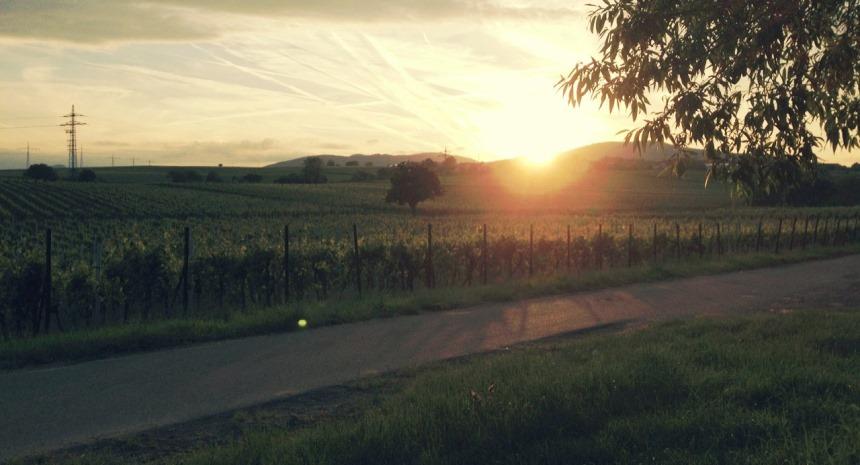 Sonnenuntergang in den Weinbergen von Nußdorf. Foto: Daniel Schumacher