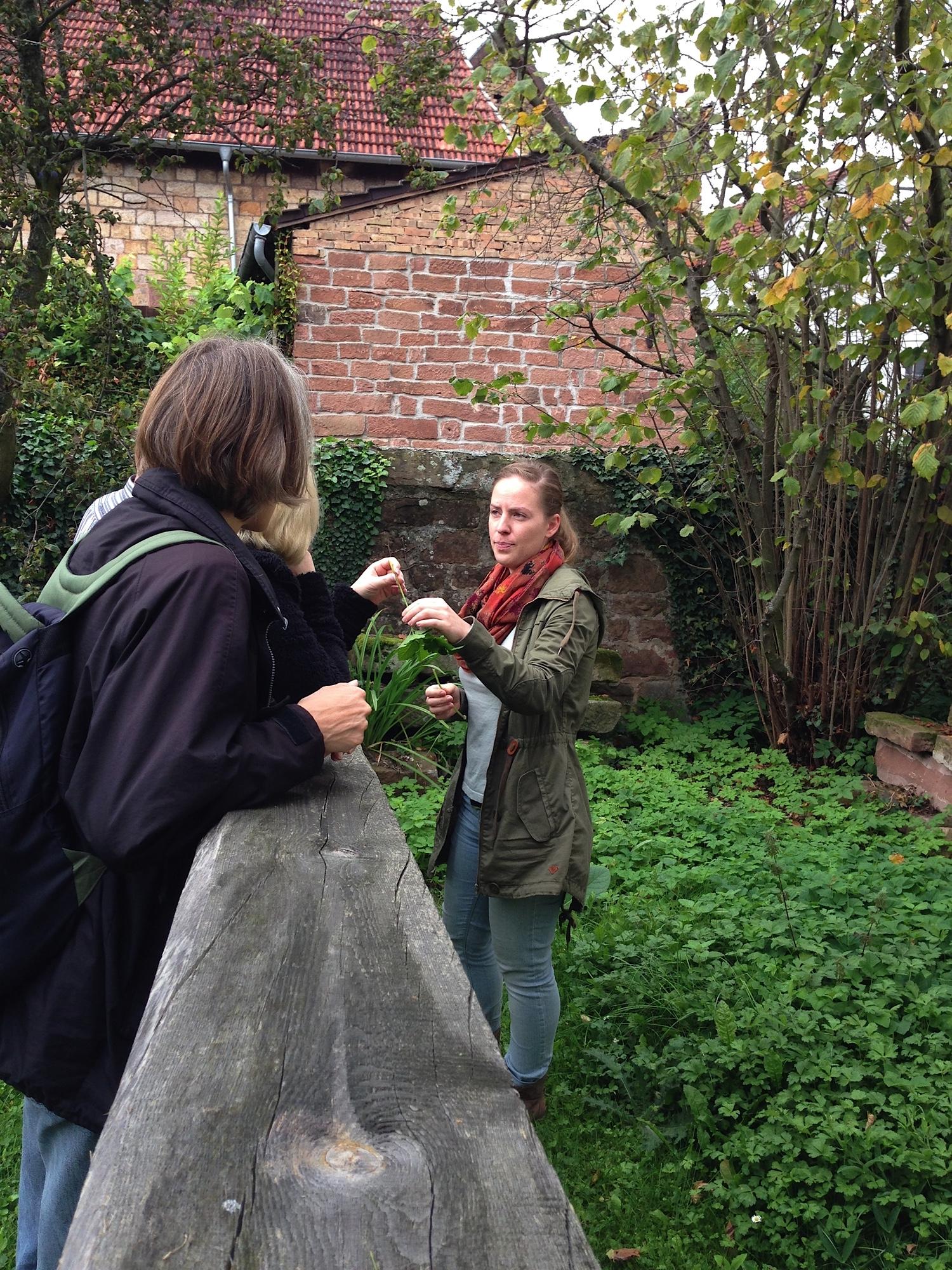 Was mümmeln Kaninchen? Für Kaninchenbesitzer organisierte Anna Halmburger eine Kräutersammlung. Foto: Privat.