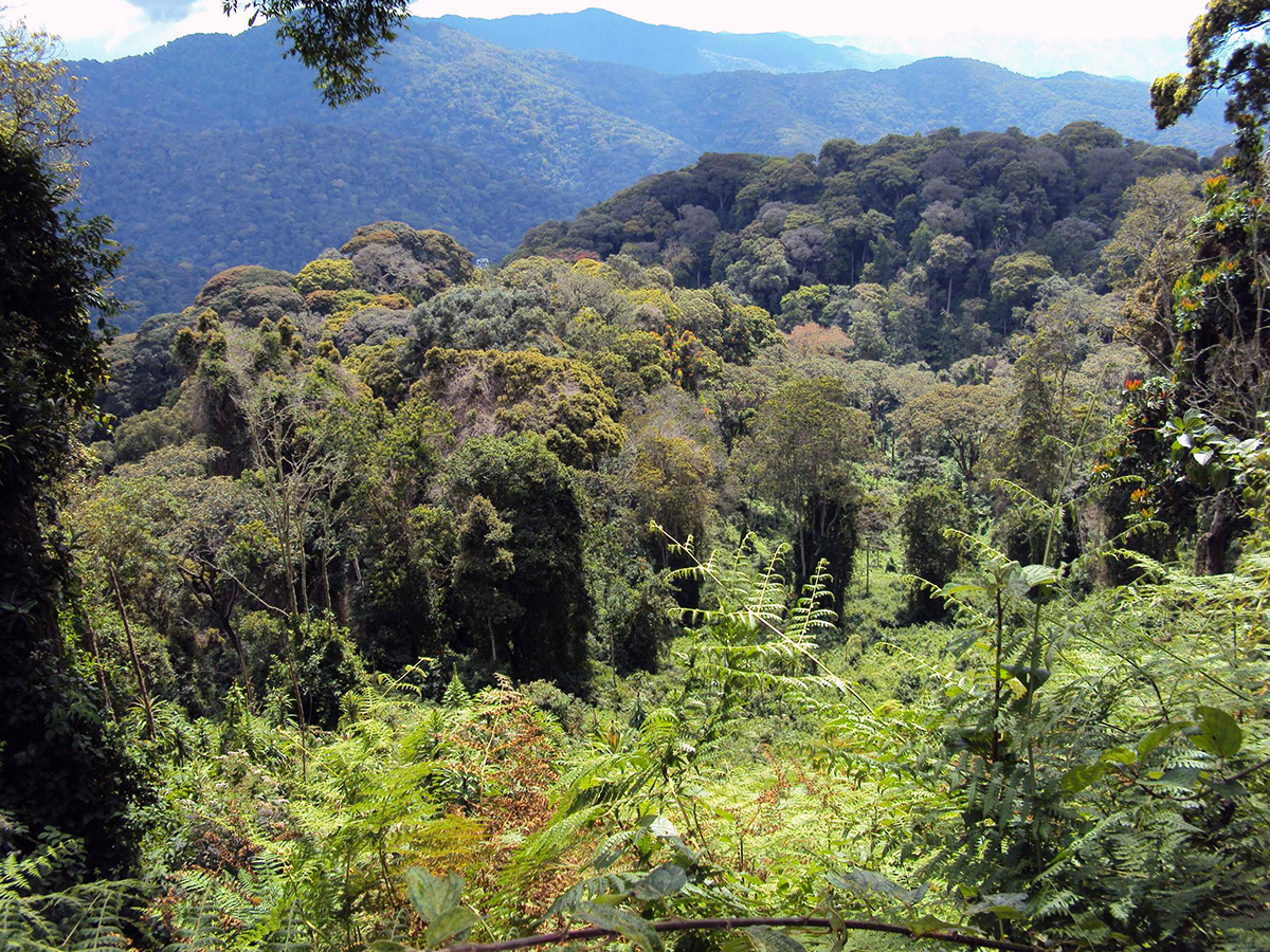 """Ruanda wird auch das """"Land der tausend Hügel"""" genannt."""
