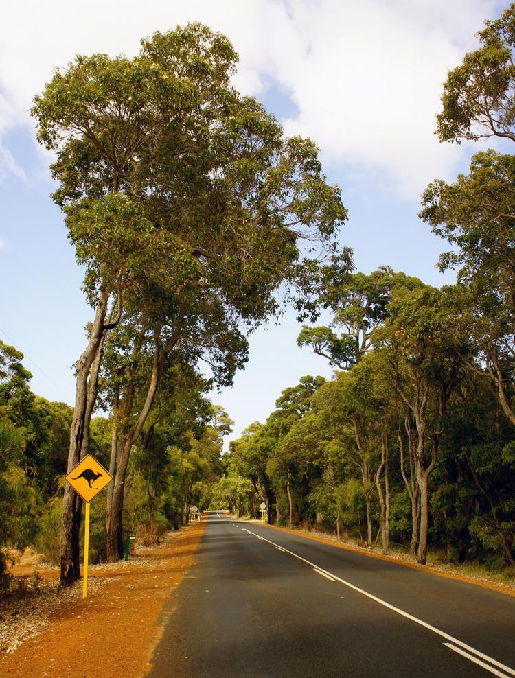Vorsicht, Kangaroo crossing! Straßen umrandet vom roten australischen Sand.