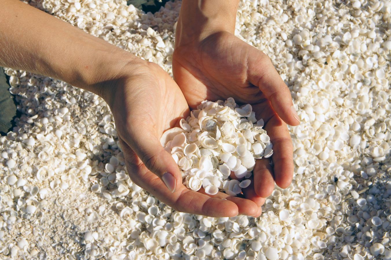 Ein Strand, der nur aus Muscheln besteht: der Shell Beach in Westaustralien.