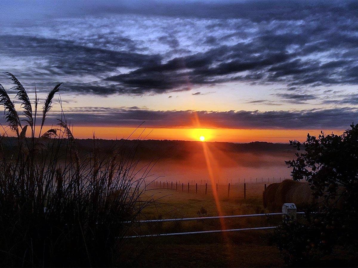 Sonnenaufgang und Nebenlschwaden: Der Tag auf der Ranch beginnt.
