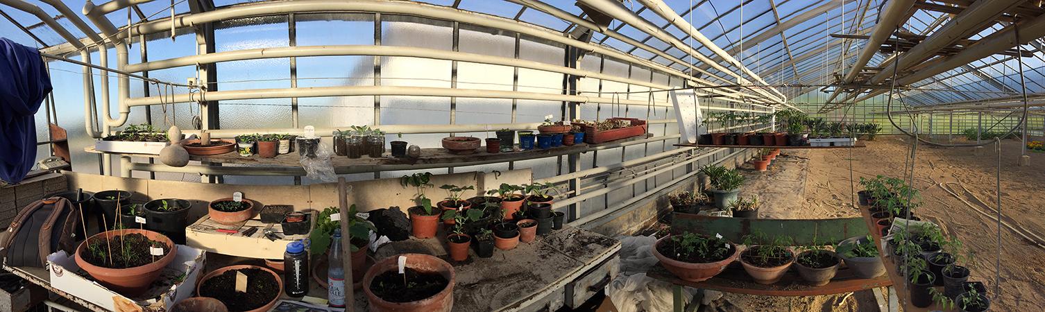 Die Pflanzen werden zunächst im warmen Treibhaus vorgezogen. Fotos: Leist
