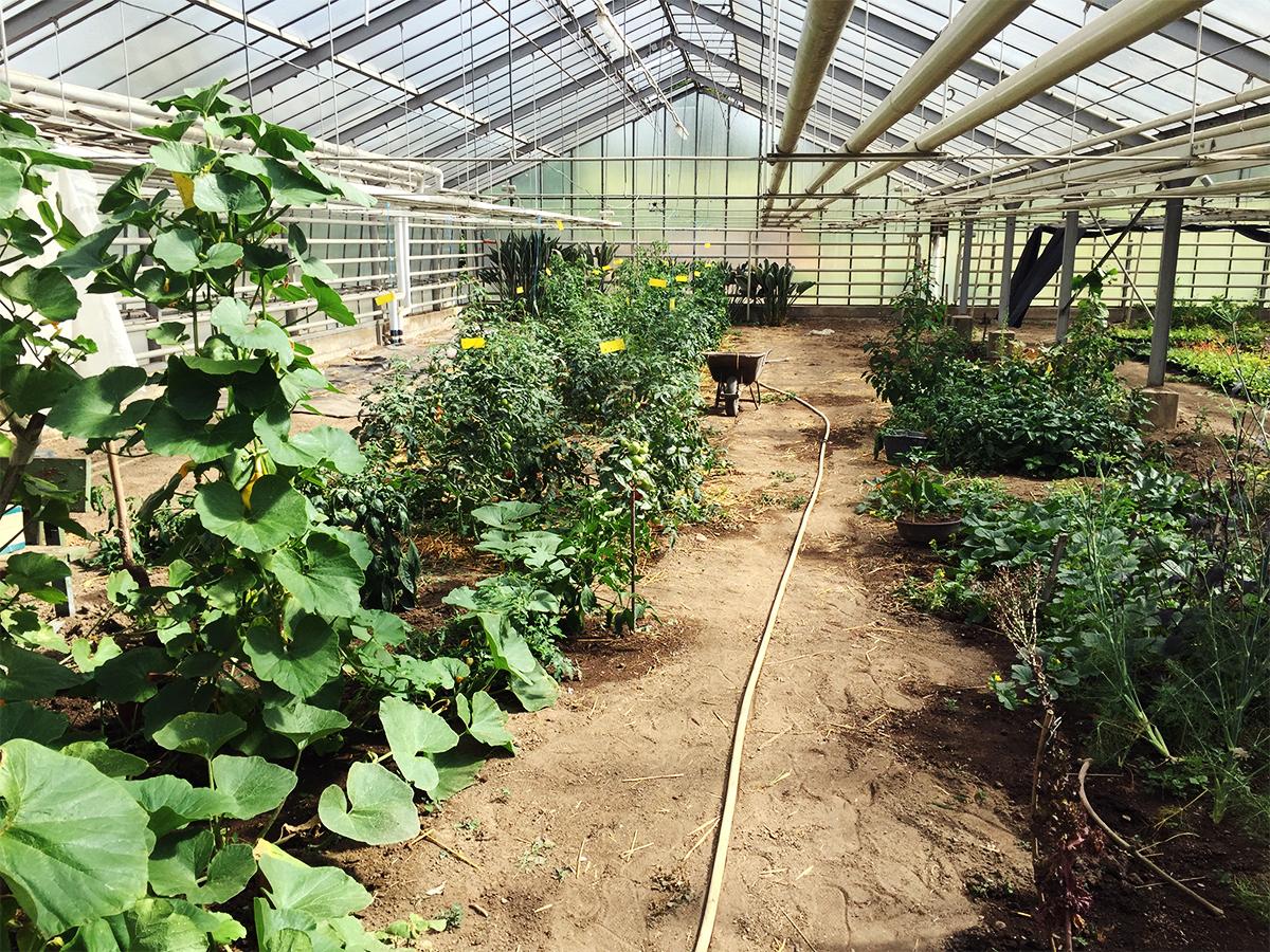 Das Gärtnereigelände besteht aus Treibhaus, Acker und Parzellen wo die Studierenden unterschiedliches Gemüse und Obst anbauen.