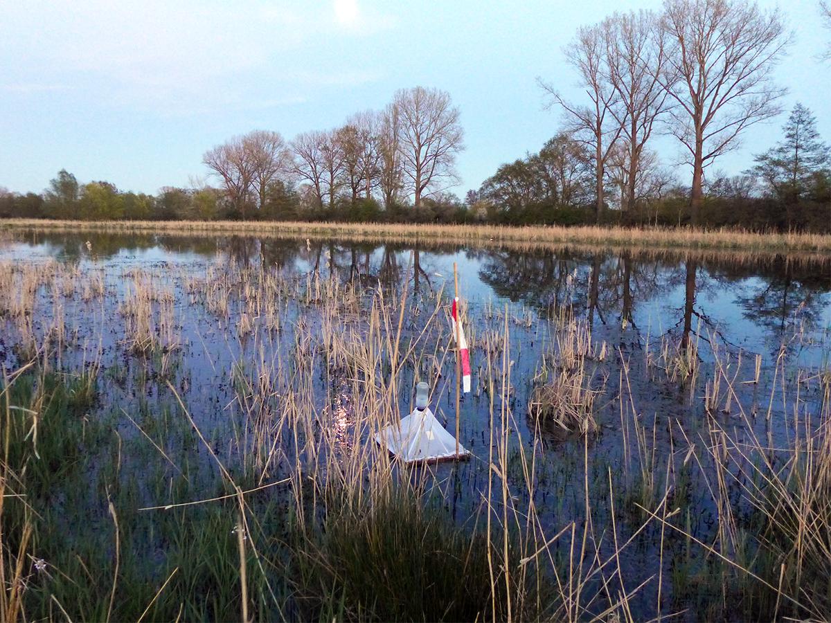 Eine Falle für schlüpfende Insekten auf einer Überschwemmungswiese.